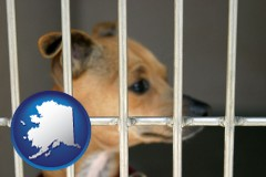 alaska a chihuahua in an animal shelter cage
