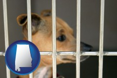 alabama a chihuahua in an animal shelter cage