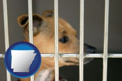 arkansas a chihuahua in an animal shelter cage