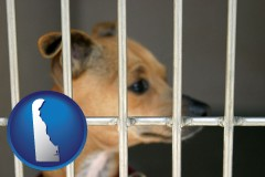 delaware a chihuahua in an animal shelter cage