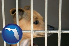 florida a chihuahua in an animal shelter cage