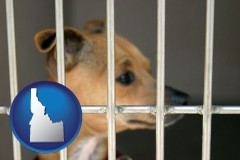 idaho a chihuahua in an animal shelter cage