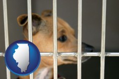 illinois map icon and a chihuahua in an animal shelter cage
