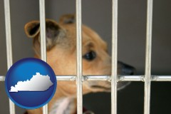 kentucky a chihuahua in an animal shelter cage