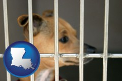 louisiana a chihuahua in an animal shelter cage