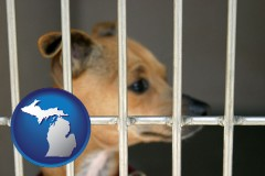 michigan a chihuahua in an animal shelter cage