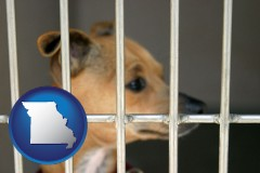 missouri a chihuahua in an animal shelter cage
