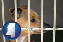 mississippi a chihuahua in an animal shelter cage