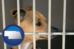 nebraska a chihuahua in an animal shelter cage