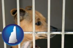 new-hampshire map icon and a chihuahua in an animal shelter cage