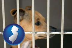new-jersey a chihuahua in an animal shelter cage