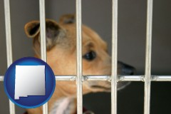 new-mexico a chihuahua in an animal shelter cage