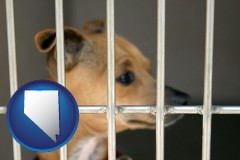 nevada a chihuahua in an animal shelter cage