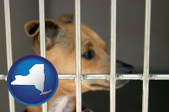new-york a chihuahua in an animal shelter cage