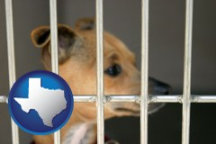 texas map icon and a chihuahua in an animal shelter cage