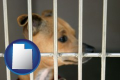 utah map icon and a chihuahua in an animal shelter cage