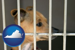 virginia a chihuahua in an animal shelter cage
