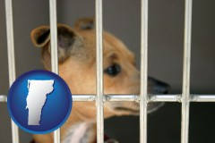vermont map icon and a chihuahua in an animal shelter cage