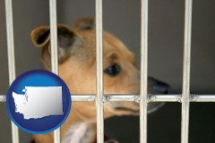 washington a chihuahua in an animal shelter cage