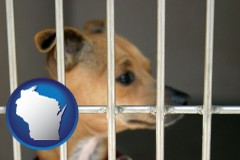 wisconsin a chihuahua in an animal shelter cage