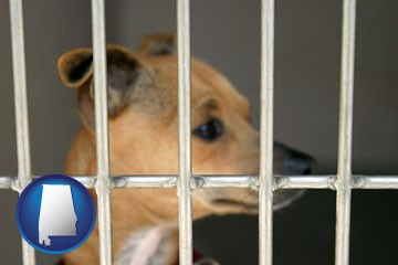 a chihuahua in an animal shelter cage - with Alabama icon