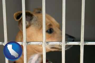a chihuahua in an animal shelter cage - with California icon