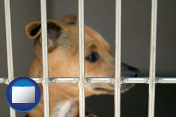a chihuahua in an animal shelter cage - with Colorado icon
