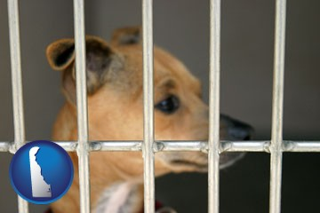 a chihuahua in an animal shelter cage - with Delaware icon