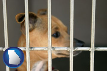 a chihuahua in an animal shelter cage - with Georgia icon