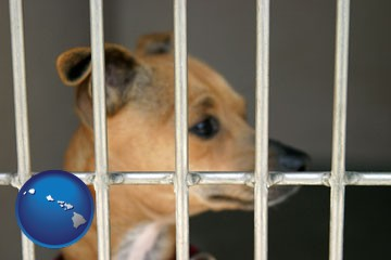 a chihuahua in an animal shelter cage - with Hawaii icon