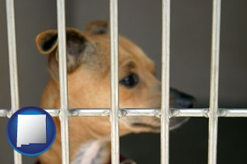 a chihuahua in an animal shelter cage - with New Mexico icon