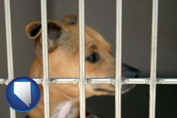 a chihuahua in an animal shelter cage - with Nevada icon