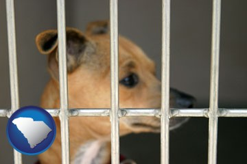 a chihuahua in an animal shelter cage - with South Carolina icon