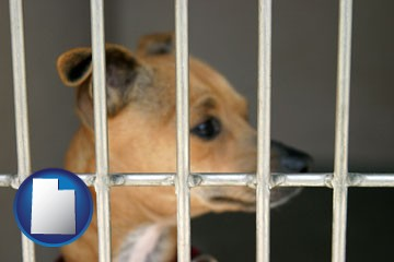 a chihuahua in an animal shelter cage - with Utah icon