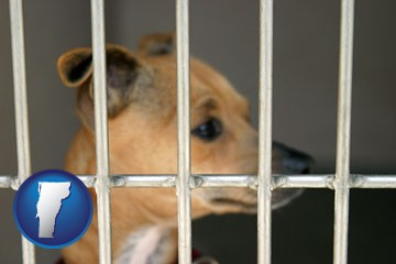 a chihuahua in an animal shelter cage - with Vermont icon